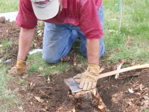 Digging out a stump in the back yard